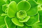 Wurz-greenery