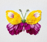 Flower petal butterfly - Raku Inoue 2