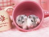 [wallcoo_com]_lovely_pet_Hamster_Picture_1da033098s