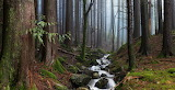 Misty Forest Stream