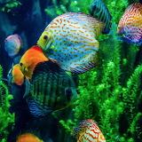 Colorful fish!