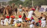 India, Rajasthan, Pushkar camel fair