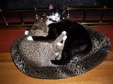Lovey Kitties Belle and Hank