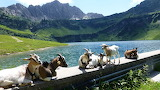 Tyrol-montañas@doll28