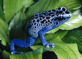 Rainforest-Animals-Wallpaper-Desktop-Background