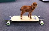 Skateboarding Kid!