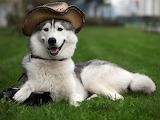 Goofy Doggo