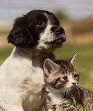 Portrait of pup and kitten