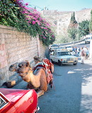 Paralell Parked Camel