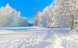 ^ Winter beauty