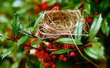 ☺ Nest...