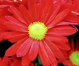 Flores501