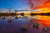 Julie Fletcher Photography 'Derby Wetlands'