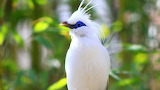 Amazing-Birds-Photos-HD-Pictures