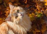 Cats Autumn Glance Foliage Snout Ginger color 569613 1280x914