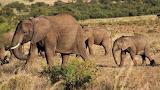 African-elephant-4889366 960 720