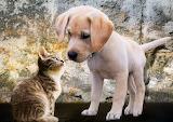 Kitten-and-puppy