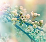 Depositphotos 52606575-stock-photo-soft-focus-on-flowering-branc