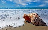 Caracol y mar