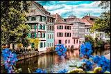 Alsace Blue Flowers
