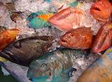 Ocean Bounty