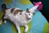 I am NOT Celebrating!