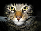 Wallpaper Katze