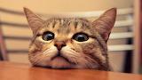 Cute-cat-wallpapers_34549_1920x1080