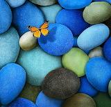 Butterfly on Blue...