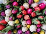 #Tulip Bouquet
