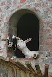 Animals tumblr mohnblumesworld Goats