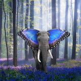 Rare Butterfly Elephant 2