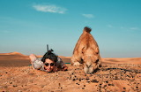 Copy Camel