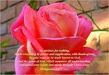 ~Philippians 4 Verses: 6-7 ~