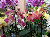 Orquídeattt