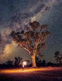 Milky Way behind Tree Flinders Ranges South Australia