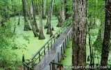 Tupelo-Bald-Cypress-Swamp-Mississippi-1000x640