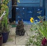 Checking on the garden