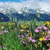 National Park Wyoming,USA