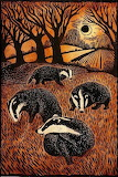 "Animals tumblr dogstardreaming ""Badger family"" ""Ian MacCulloch"""