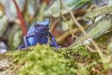 Bluefrog