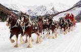 ~christmas horse ride~