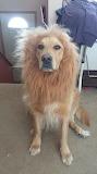 The Ferocious Liondog