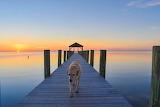 Beach dog on pier