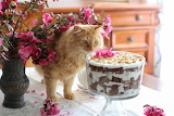Cat, flowers, cake, kitchen, table, room, bouquet, red, vase, pi