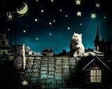 beautiful starry night