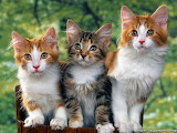 Wallpapers-of-cute-animals-77