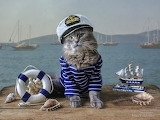 cat dressed as a marine