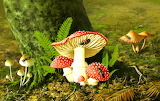 Mushrooms fern flies