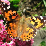 Closeup of colorful butterfly